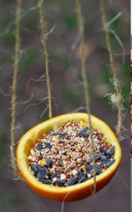 3 easy bird feeders to make with kids1