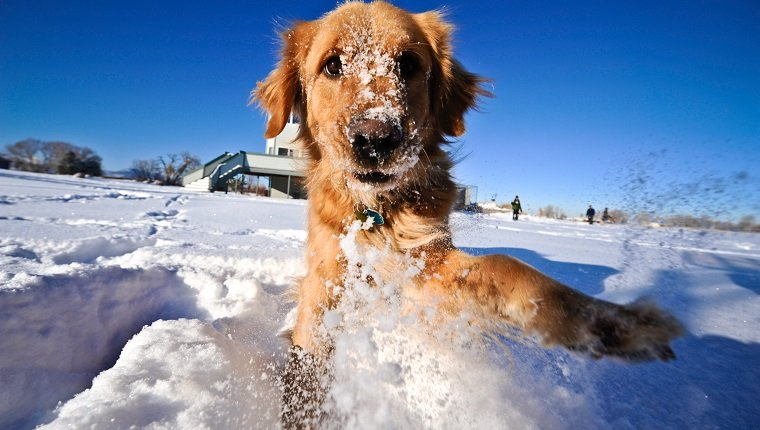 snow maze dogs 1