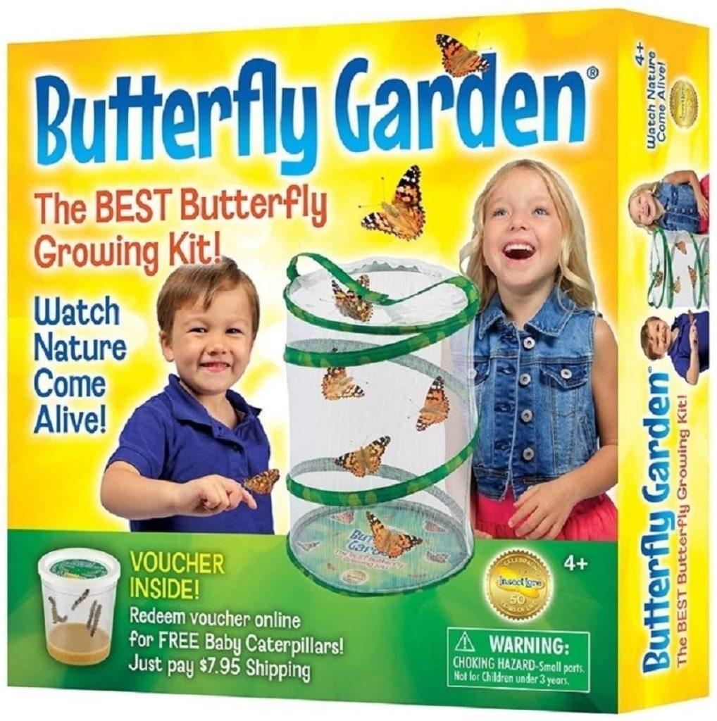 butterfly lore
